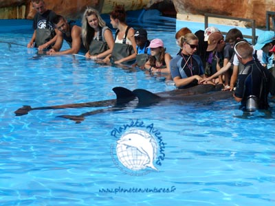 Rencontre avec les dauphins pour ces enfants en colonie de vacances